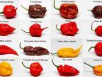 20161020-ghost-peppers-cabe-terpedas_20161020_090552.jpg