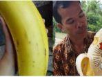20171006-pisang-raksasa_20171006_182829.jpg
