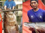 20180626-penemuan-ikan-raksasa-di-indonesia_20180626_170950.jpg