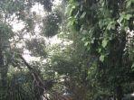 bagian-pohon-ambruk-ke-jalan.jpg
