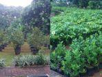 dinas-kpkp-dki-jakarta-menyediakan-bibit-pohon-gratis-untuk-warga-jakarta.jpg