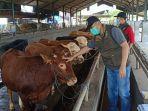 dinas-pertanian-cek-hewan-kurban.jpg