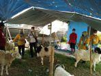 dinas-pertanian-provinsi-banten-monitoring-hewan-kurban.jpg