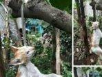 foto-kucing-digantung-hingga-mati-di-pohon-setelah-makan-merpati-di-bali-viral181.jpg