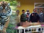 heboh-harimau-cabik-cabik-petani-hingga-sebagian-tubuhnya-hilang151.jpg