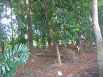hutan-kota_20180327_085446.jpg