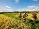 ilustrasi-sektor-pertanian.jpg