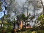 kebakaran-gunung-slamet.jpg