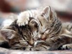 kucing_20170622_134308.jpg