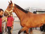 kuda-asal-belgia-tiba-di-bandara-soekarno-hatta-2_20180821_123143.jpg
