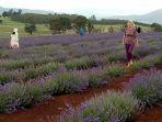 lavender_20171216_043908.jpg