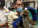 monyet-tertangkap.jpg