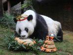 panda-tertua_20170914_230552.jpg