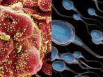 peneliti-china-temukan-fakta-baru-virus-corona.jpg