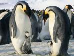 pinguin_20151223_012103.jpg