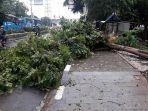 pohon-tumbang-di-jalan-mayjen-sutoyo.jpg