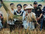 presiden-republik-indonesia-soeharto-tengah-memanen-padi.jpg