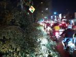 sebuah-pohon-berukuran-besar-tumbang-di-jalan-raya-bogor.jpg