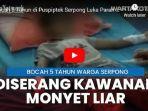 seekor-monyet-liar-menyerang-seorang-anak-bernama-rasyiqil-zafran.jpg