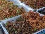 serangga-3110.jpg