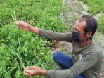 sudarsa-48-petani-yang-raup-untung-puluhan-juta-rupiah-dari-budidaya-genjer.jpg