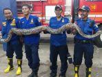 tim-rescue-damkar-kabupaten-bekasi-tangkap-30-ular1.jpg