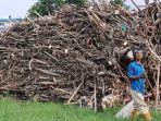 udin-penarik-becak-terpaksa-mencari-kayu-bakar-di-kali-bekasi-demi-bertahan-hidup3.jpg