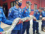 ular-damkar.jpg