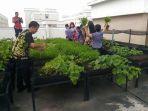 urban-farming_20180128_170855.jpg