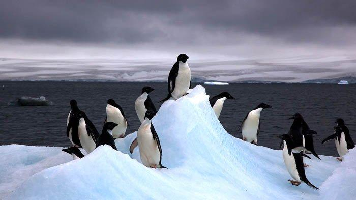 Mengenal Antartika, yang Bakal Menjadi Destinasi Bulan Madu Nikita Willy dan Indra Priawan