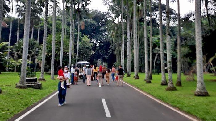 Pengelola Kebun Raya Bogor menerapkan protokol kesehatan yang ketat, salah satunya dengan pembatasan jumlah pengunjung.