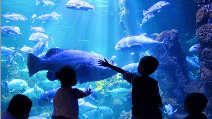 Sea World Ancol Sajikan Atraksi Ying Yang Barongsai di Hari Raya Imlek