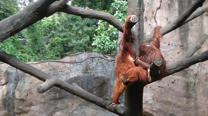 Jangan Lupa Registrasi Bila Ingin Berkunjung ke Taman Margasatwa Ragunan