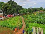 ecofarm-koang-jaya-2.jpg