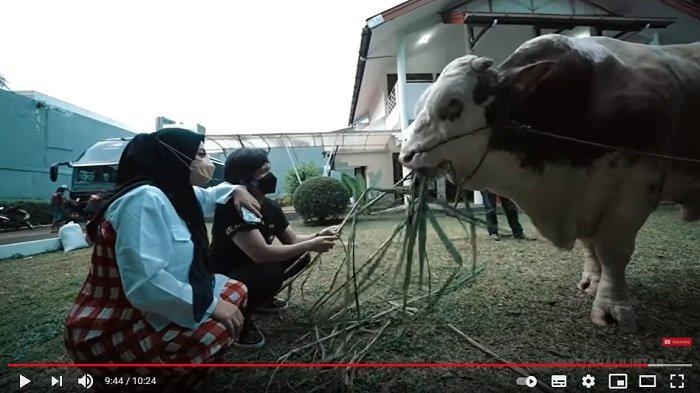 Atta Halilintar beli sapi 1,4 ton buat Aurel Hermansyah.