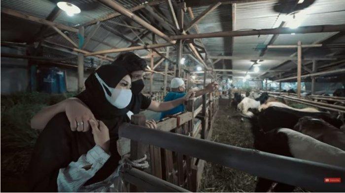 Atta Halilintar dan Aurel Hermansyah memilih hewan kurban untuk Idul Adha, Kamis (15/7/2021).
