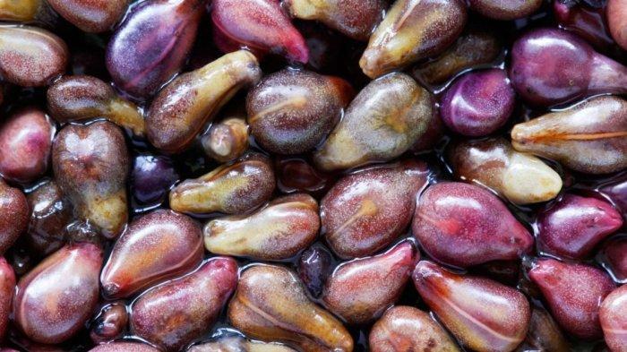 Sering Dibuang, Simak Manfaat Biji Anggur yang Bisa Melawan Kanker, Banyak Kandungan Bermanfaat