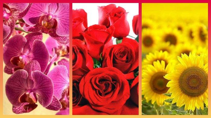 Jenis Bunga Favorit Bisa Ungkap Kepribadian Lho Cek Yuk Di Sini Tribun Wow