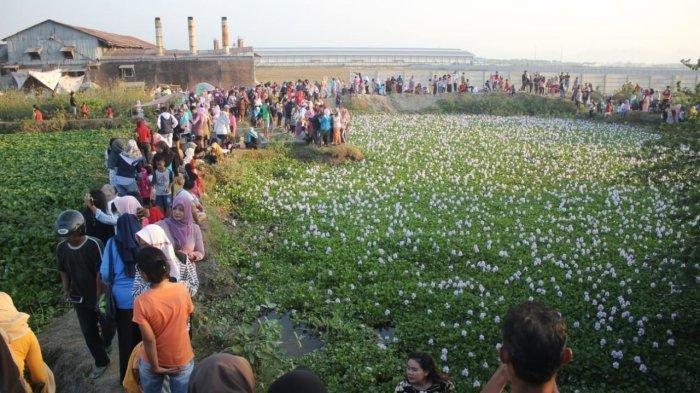 Tempat Wisata Hits di Cirebon, Penuh Bunga Cantik Bak di Korea Selatan