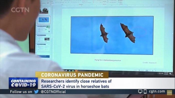 Misteri Asal Usul Covid-19: Peneliti Temukan Virus Mirip Corona pada Kelelawar di Laos
