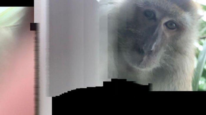 Foto monyet lainnya yang menurut Zackrydz, ia temukan dalam ponselnya