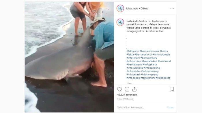 Sebuah video usaha penyelamatan hiu terdampar di pantai, Bali viral di media sosial Instagram.