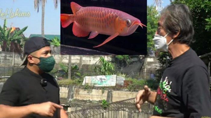 Sosok Pang Lesmana, Sahabat Irfan Hakim yang 500 Ikan Arwananya Dicuri Karyawan, Rugi Rp 24 Miliar