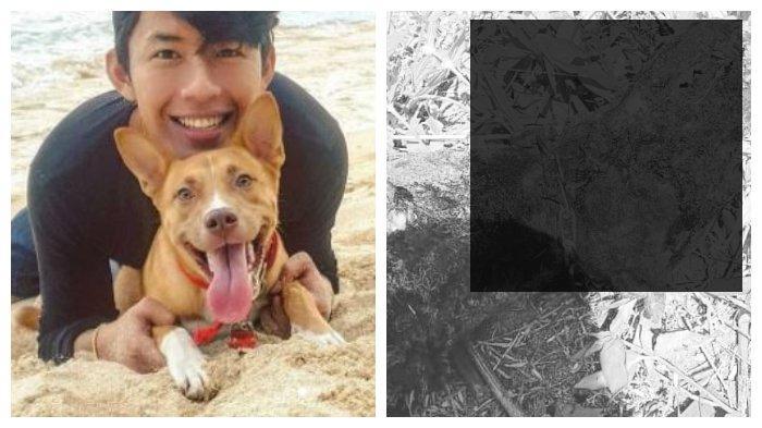 Pembantaian Sadis di Pacitan, Belasan Anjing Dibakar dan Dibiarkan Tergeletak di Sekitar Pantai