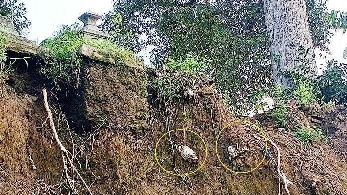 Jenazah di dalam kafan yang nampak mau terjatuh karena longsor di tepi Kali Pepe di TPU Dusun Bendungan, Desa Klodran, Kecamatan Klodran, Kabupaten Karanganyar, Senin (22/2/2021).