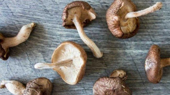 Meski Aman Dikonsumsi, Jamur Shiitake Ternyata Juga Punya Efek Samping, Ini Klaim Para Peneliti