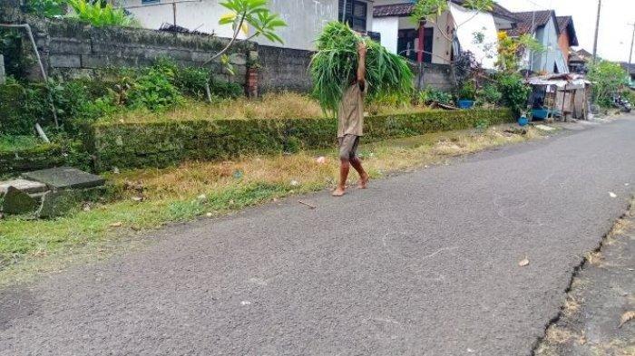 Suasana di areal TKP penusukan di Banjar Darma Kelod, Desa Riang Gede, Kecamatan Penebel, Tabanan, Rabu 24 Maret 2021 pagi.