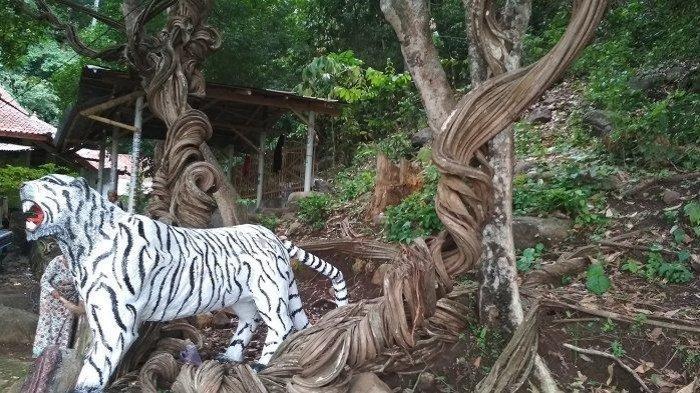 Pohon Raga Sakti di Cirebon Berbentuk Ular Naga sejak Ratusan Tahun dan Dipercaya untuk Menolak Bala