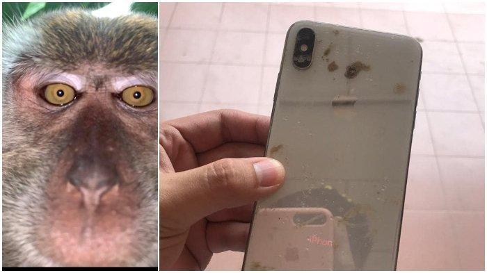 Cerita Pria Malaysia yang Temukan 'Selfie' Monyet dalam Ponsel yang Sempat Hilang: Ini Semacam Sihir