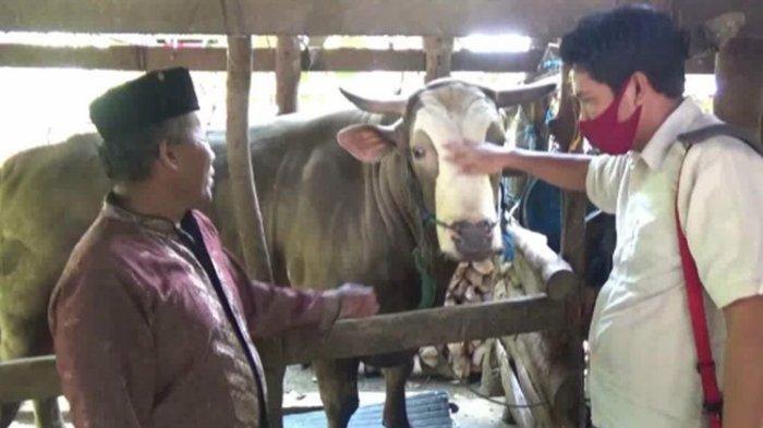 Penjual Sujud Syukur saat Sapinya Bernama 'Puang Tedong' Berbobot 1,2 Ton Dibeli Presiden Jokowi